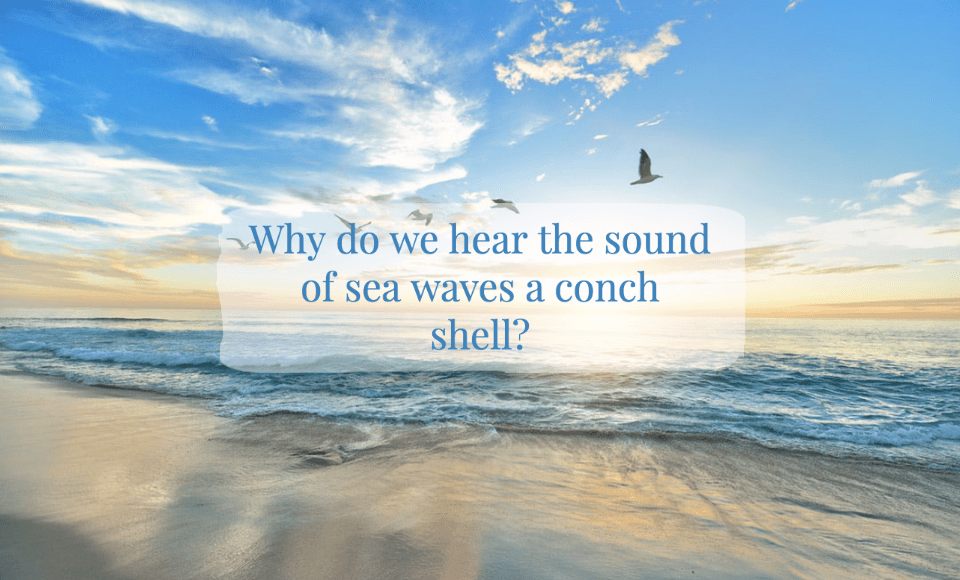 Why do we hear the sound of sea waves a conch shell