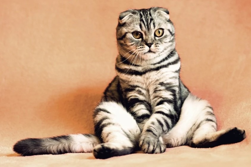 a cat with white and black stripes is sitting