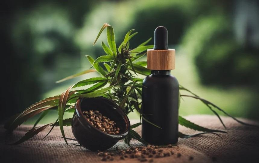 Cannabis plant, cannabis seeds, and cannabidiol